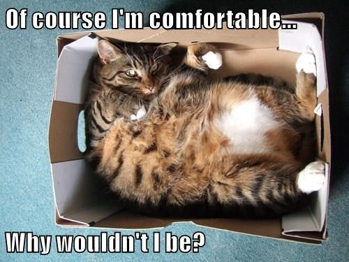 Of course I'm comfortable...  Why wouldn't I be?