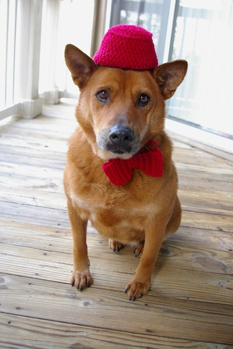 funny doctor who dog dressed in fez and bowtie
