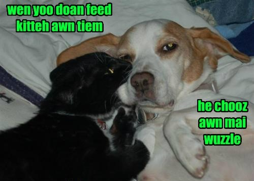 dogs help noms Cats - 8440910336
