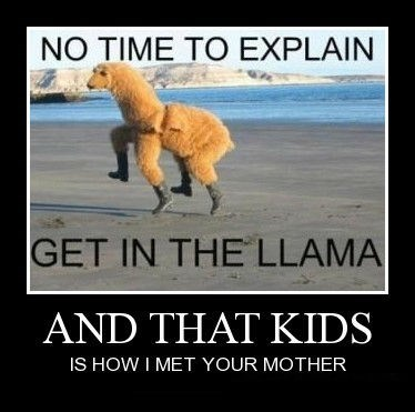llama how i met your mother funny - 8441027840