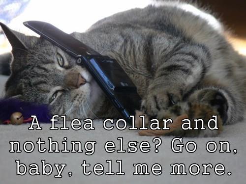 animals phone Cats - 8441164800