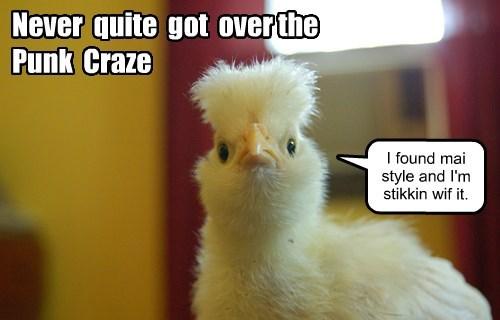 hair punk baby animals birds chick - 8441254656