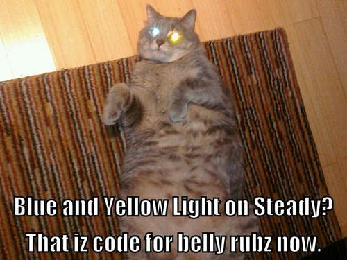 belly rubs Cats code laser eyes - 8441336320