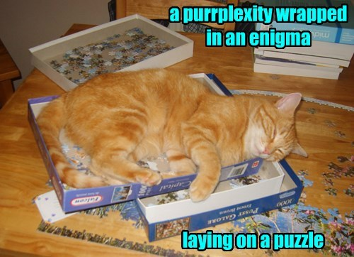 cat puzzle enigma captions - 8441377024