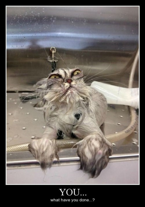 bath scared Cats funny - 8441390592