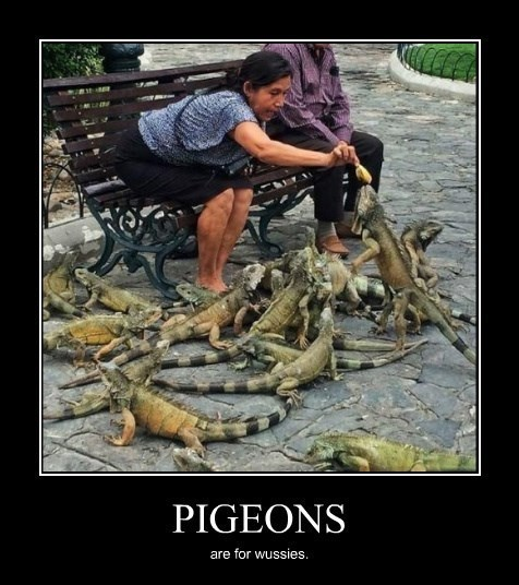 lizards,wtf,pigeons,funny