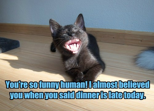 cat dinner caption late funny - 8441671168