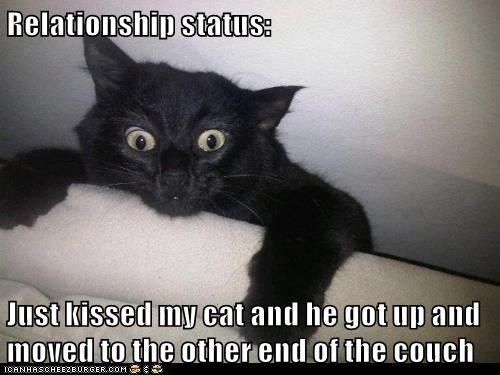 relationship,Awkward,Cats,black cat