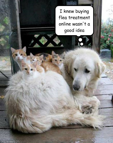 I knew buying flea treatment online wasn't a good idea Chech1965 050215
