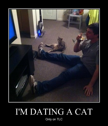 Cats dating - 8441781504