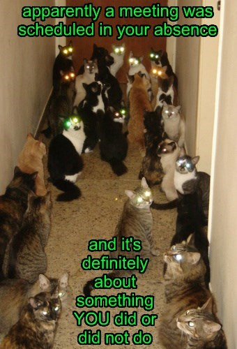 crazy cat lady run nightmare Cats
