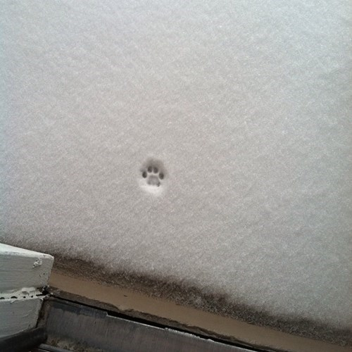snow nope winter Cats - 8441813504
