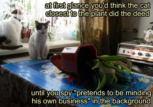 spy background caption Cats plant - 8441872128