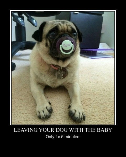 dogs baby wtf funny - 8441916928