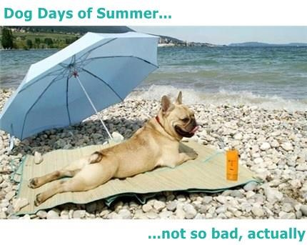 Dog Days of Summer...  ...not so bad, actually