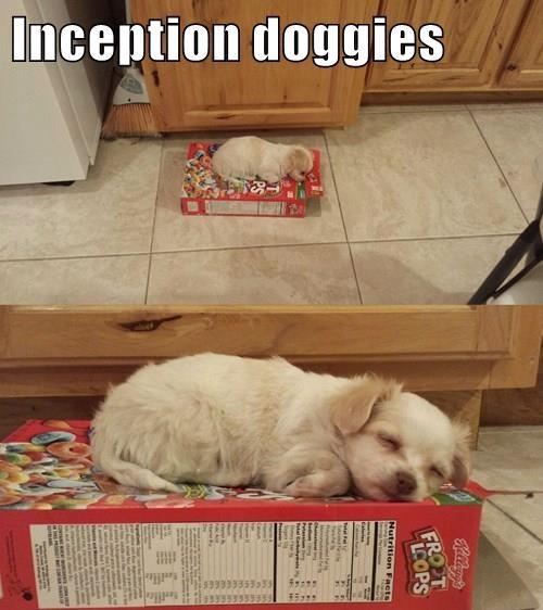 Inception doggies