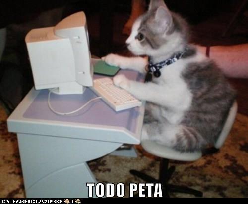 animals - 8442240512