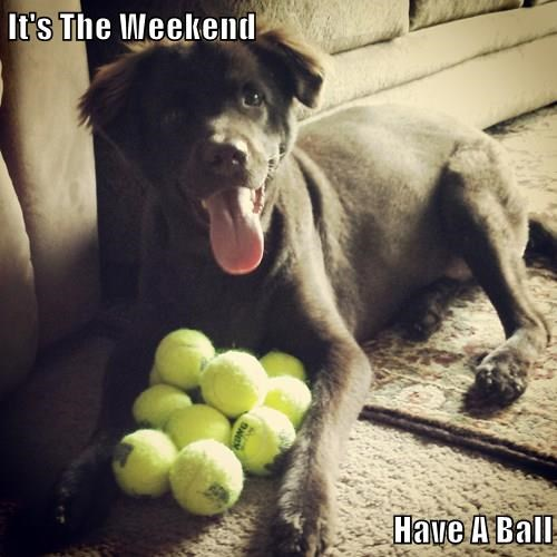 dogs,ball,puns,weekend