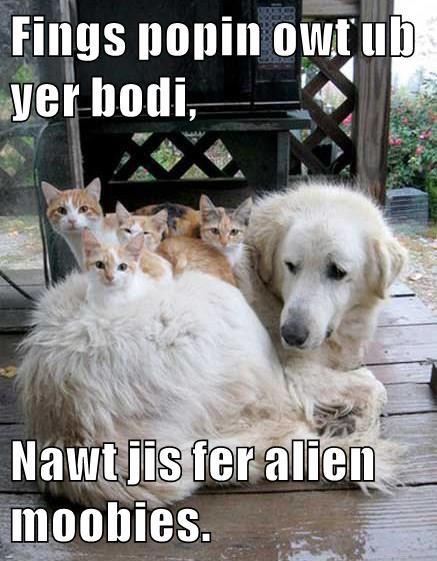 Fings popin owt ub yer bodi,   Nawt jis fer alien moobies.