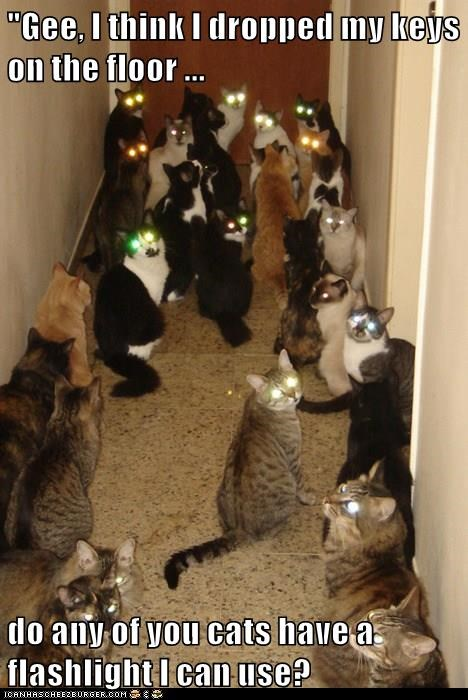 animals lots of cats headlights glowing eyes Cats - 8442301696