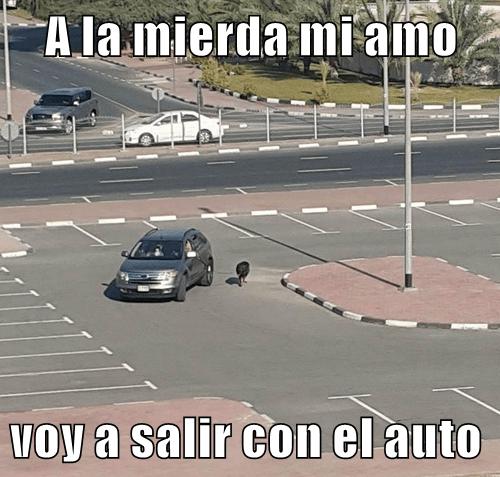 perro sale a caminar con coche
