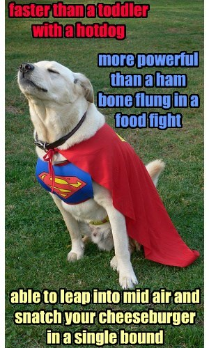 cape super heroes dogs lab superman
