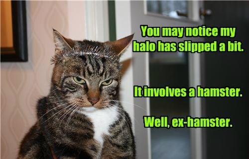 cat,slipped,halo,hamster,caption