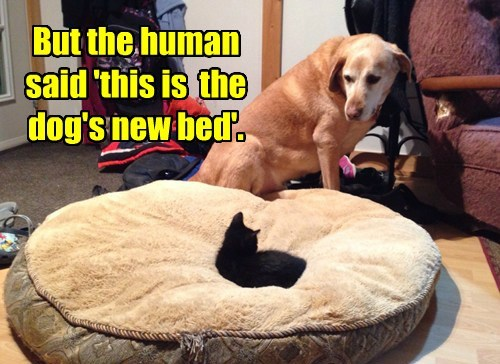dogs bed kitten Cats thief black cat - 8442918144