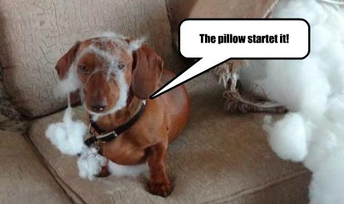 The pillow startet it!