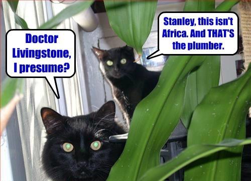 explorer Cats black cat - 8443471104