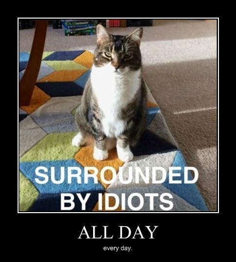 pessimist idiots Cats funny - 8443602688