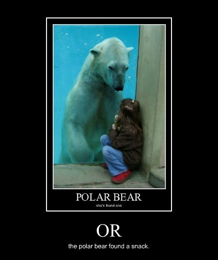 snack,kids,polar bear,funny