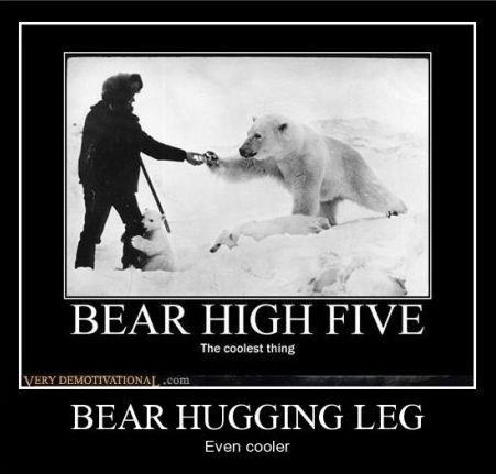 bears hugs high five funny - 8443851008