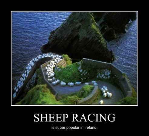 wtf race sheep funny - 8443851520