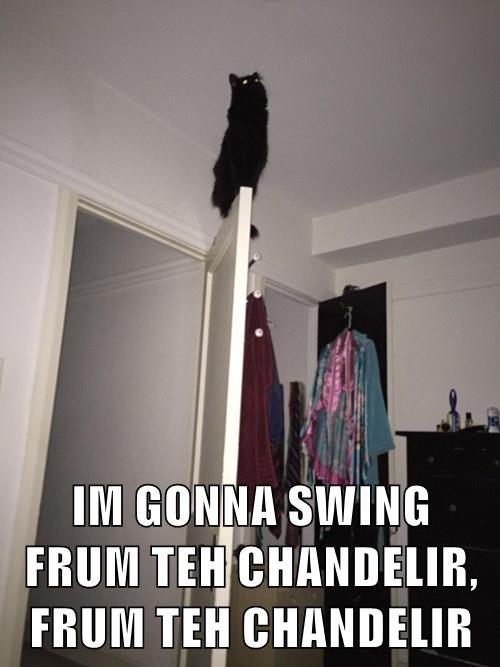animals grammmies chandelier Cats - 8443865856
