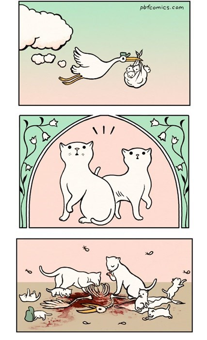 funny-web-comics-where-do-kittens-come-from