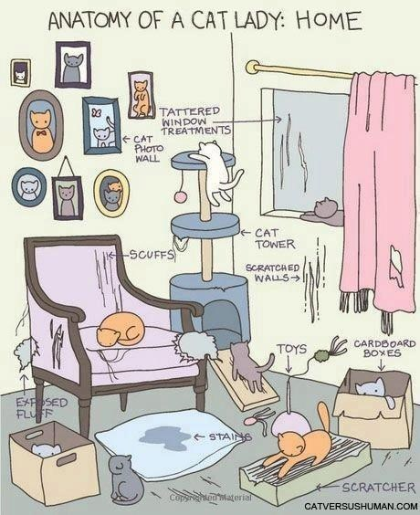 funny-web-comics-anatomy-of-a-cat-ladys-home