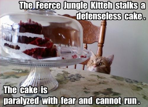 The Feerce Jungle Kitteh stalks a defenseless cake . The cake is paralyzed with fear and cannot run .