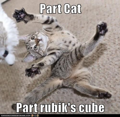 part,cat,rubiks cube