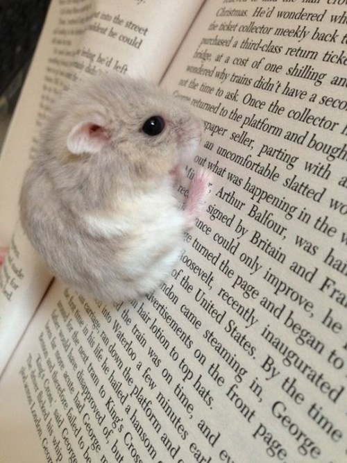 cute baby animals hamster can't read