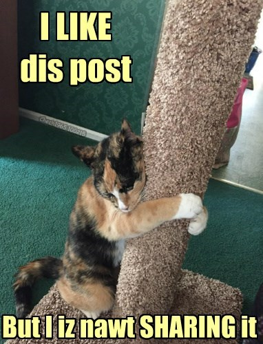 share,post,the internets,facebook,Cats