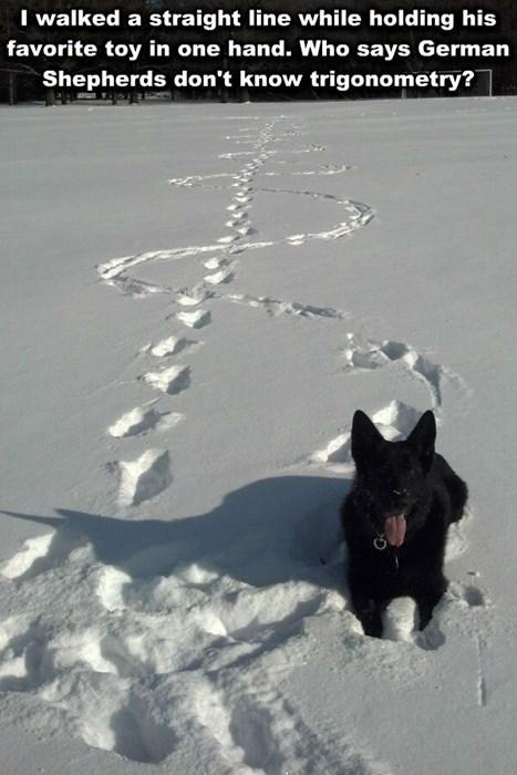 dogs german shepherd snow trigonometry Nailed It - 8444390144