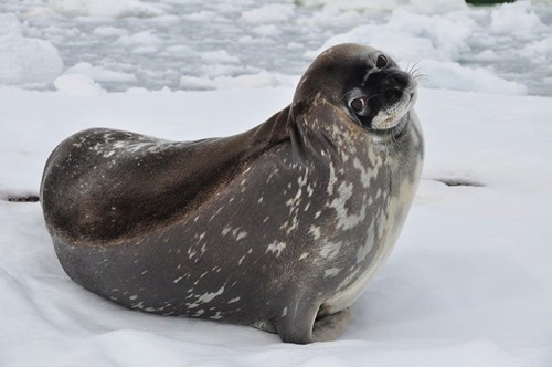 cute baby animals cute seal shrug