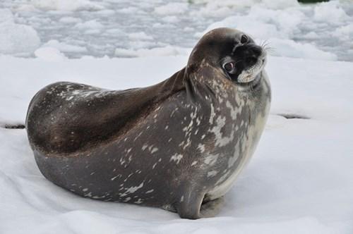 cute baby animals cute seal shrug