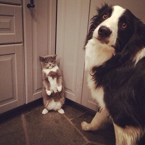cute baby animals kitty and dog scheming