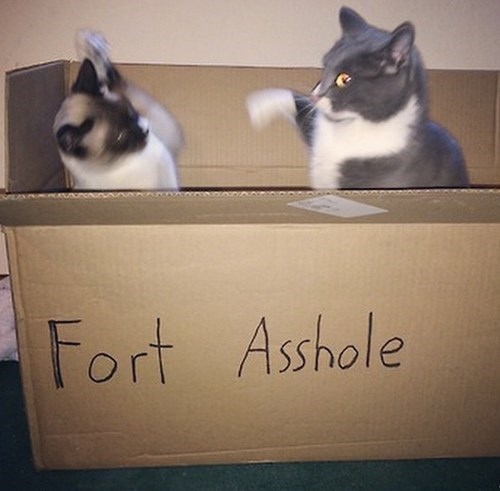 box fight if i fits i sits fort Cats