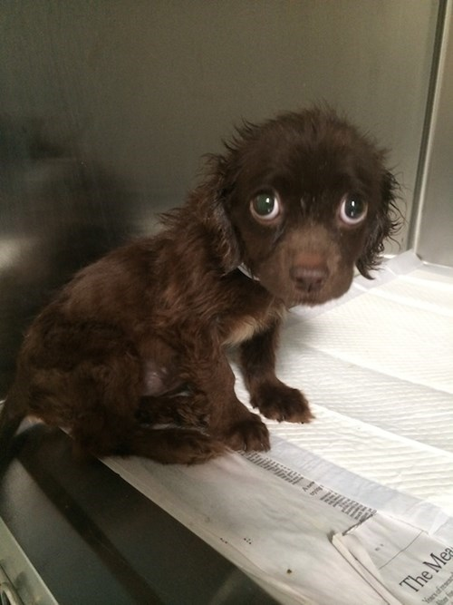cute baby animals puppy dog eyes