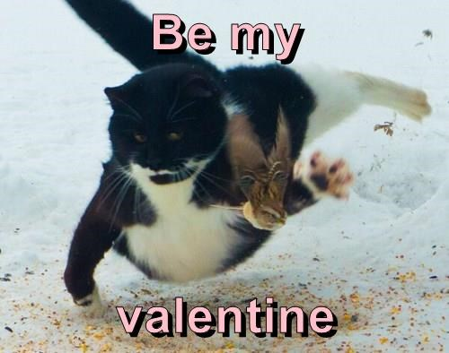 animals birds attack valentine Cats - 8444443136