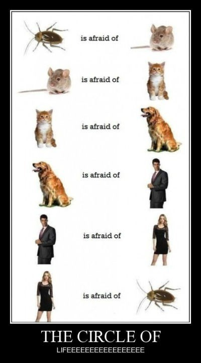 circle of life wtf phobia funny