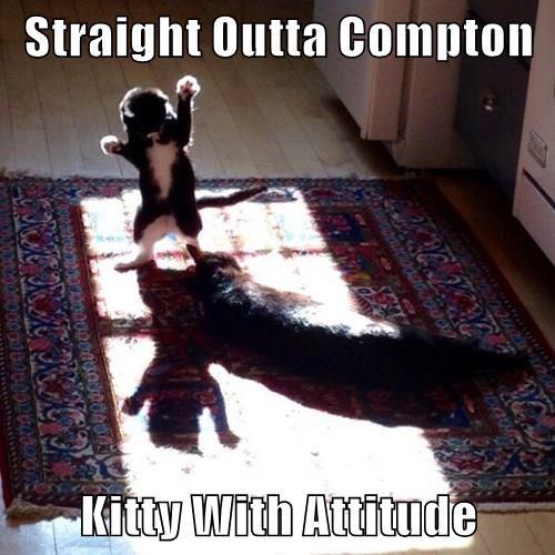 animals cat attitude compton kitty caption - 8444573440